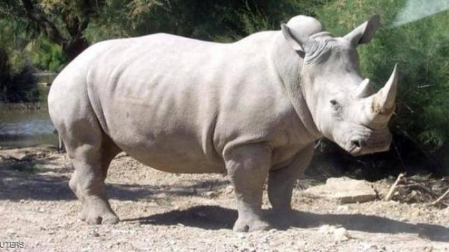 تفسير حلم وحيد القرن في المنام بالتفصيل