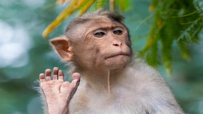 تفسير حلم القرد في المنام بالتفصيل