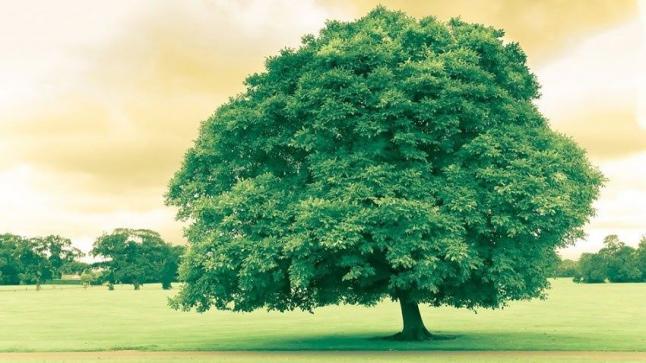 تفسير رؤية الشجرة في المنام